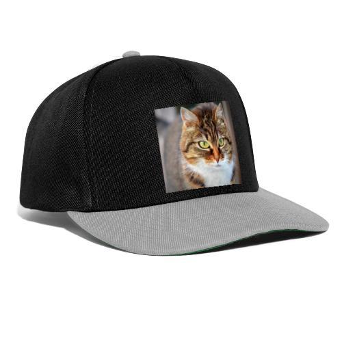 cat 300572 1920 - Gorra Snapback