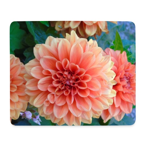 A chrysanthemum - Mouse Pad (horizontal)