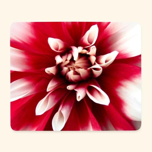Dahlienblüte, Blume, Blüte, foral, blumig, Blumen - Mousepad (Querformat)