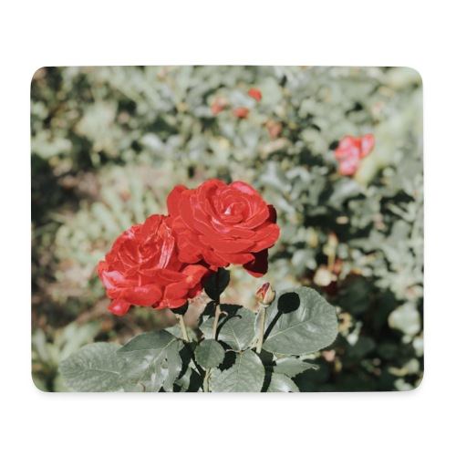 Red rose - Mousepad (bredformat)