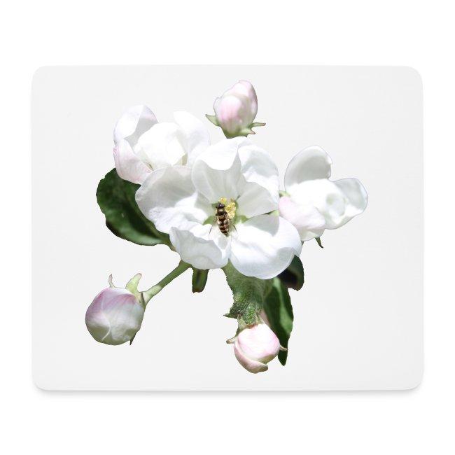 Omenankukka ja kukkakärpänen