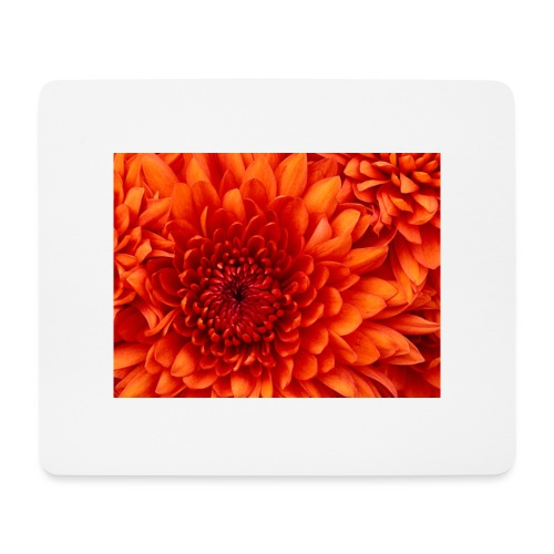 Chrysanthemum - Muismatje (landscape)
