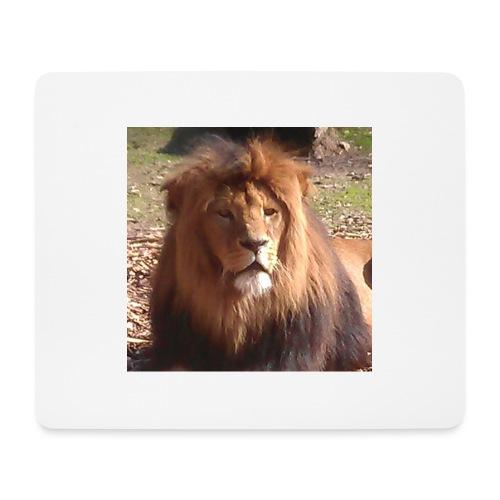 Lejon - Musmatta (liggande format)
